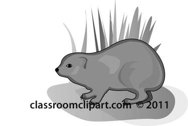 hyrax-animal-gray.jpg