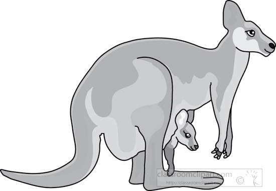 kangaroo_baby_in_pouch_2A_gray.jpg