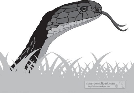 king-cobra-gray-clipart.jpg