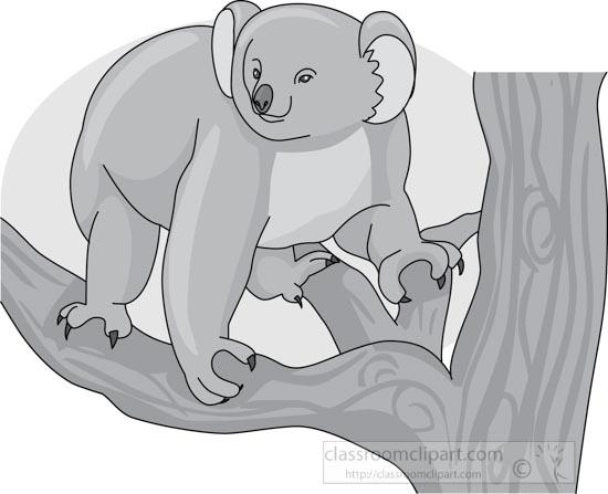 koala_bear_314_03_gray.jpg