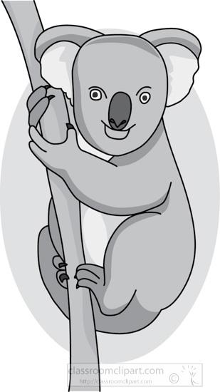 koala_bear_314_04_gray.jpg