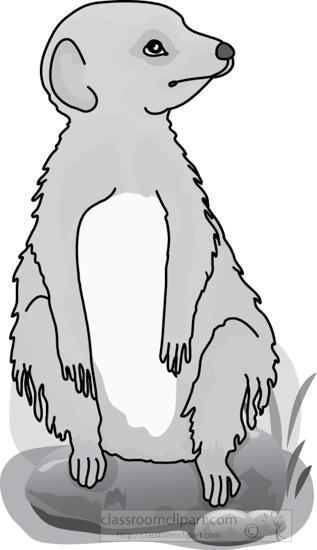 meerkat_327_4A_gray.jpg