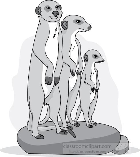 meerkat_group_312_05A_gray.jpg