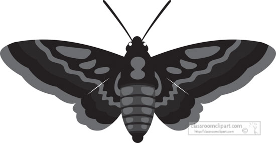 moth-insect-gray-clipart-818.jpg