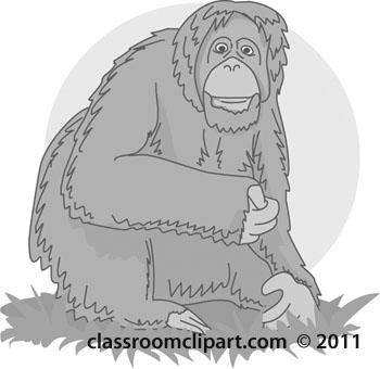 orangutan-03-gray.jpg