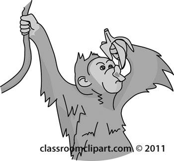 orangutan-04-gray.jpg