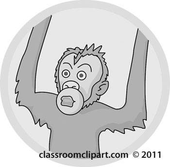 orangutan-05A-gray.jpg