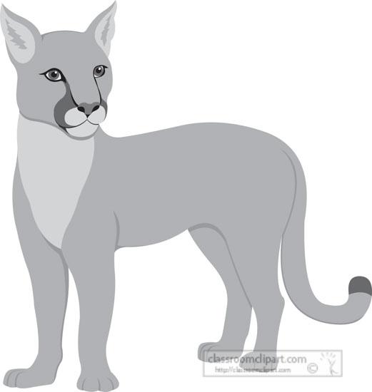 puma-cougar-mountain-lion-cat-gray-clipart.jpg