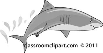 shark-01A-gray-2012.jpg