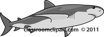 shark-05A-gray-12.jpg