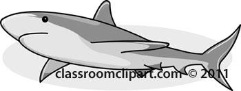 shark_02A.jpg