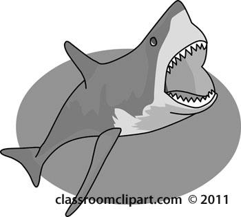 shark_04B-gray-open-mouth.jpg