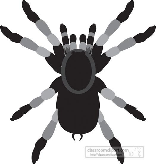 tarantula-spider-gray-clipart-818.jpg