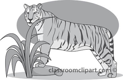 tiger_32805_gray.jpg