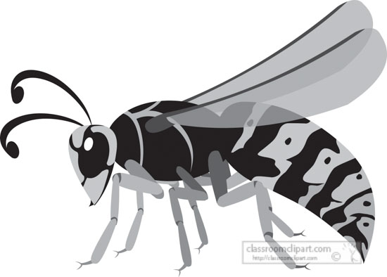 wasp-insect-gray-clipart-818.jpg