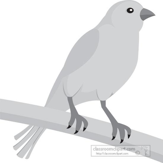 yellow-canary-bird-gray-clipart.jpg
