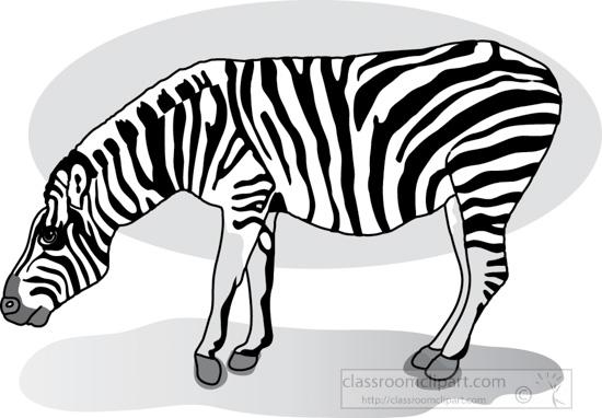 zebra_327_1Agray.jpg