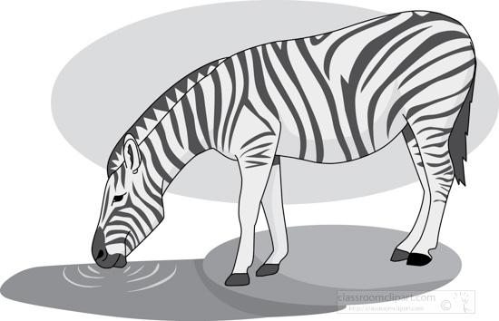 zebra_328_1_gray.jpg