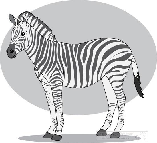 zebra_328_3_gray.jpg
