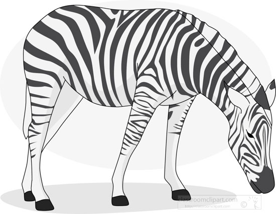 zebra_328_4_gray.jpg