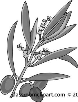 olives-on-branch-with-blooms-gray.jpg