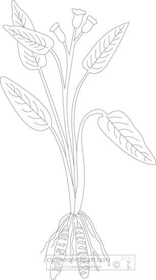 black-white-outline-clipart-of-arrowroot2.jpg