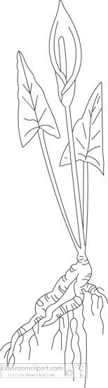 black-white-outline-clipart-of-wildginger.jpg