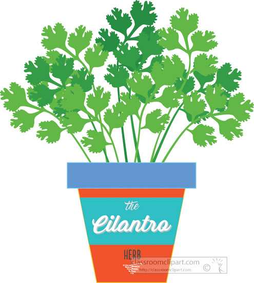 cilantro-growing-in-planter-herb-clipart-318A.jpg