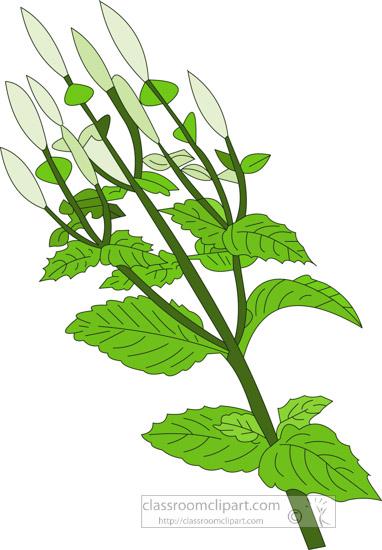 clipart-of-the-herb-bergamotmint.jpg