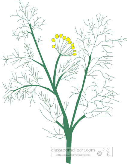clipart-of-the-herb-fennel.jpg