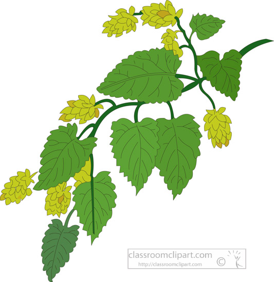 clipart-of-the-herb-hops.jpg