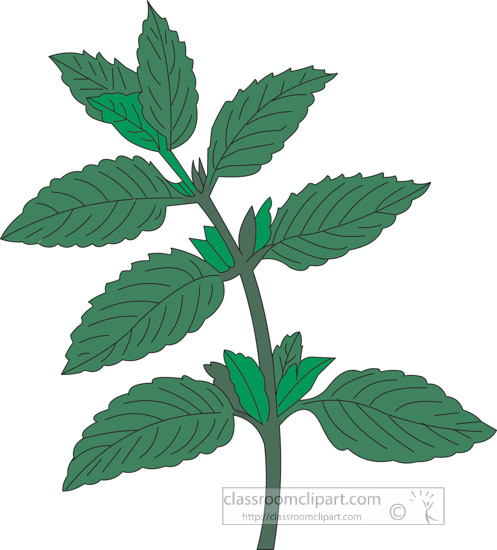 clipart-of-the-herb-peppermint.jpg