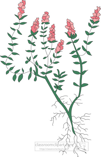 clipart-of-the-herb-thyme.jpg