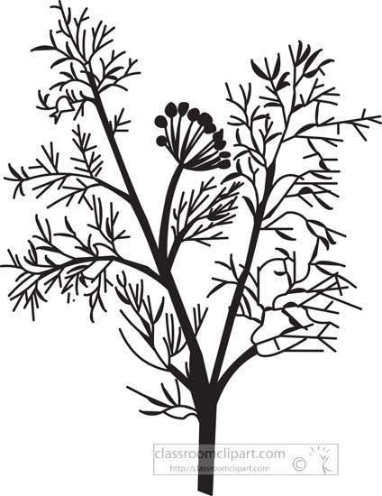 fennel-herb-black-white-outline-clipart.jpg