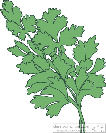 herbs-parsley-clipart-5771.jpg