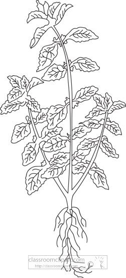 horehound-herb-black-white-outline-clipart.jpg