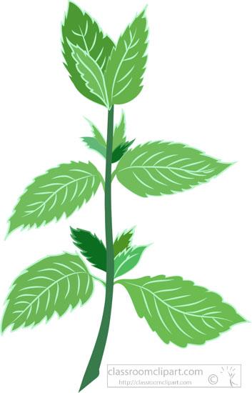 mint-herb-plant-leaf-clipart.jpg