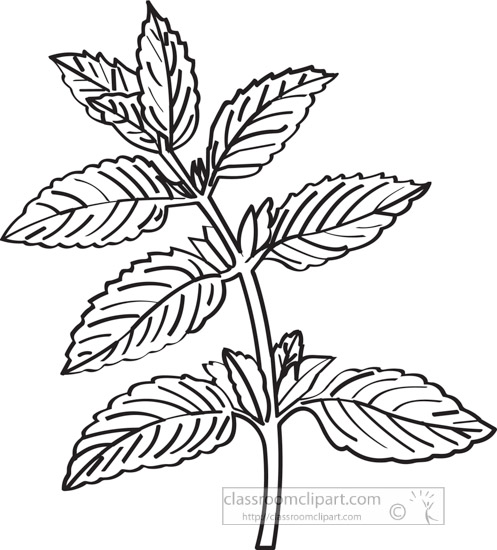 peppermintherb-black-white-outline-clipart.jpg