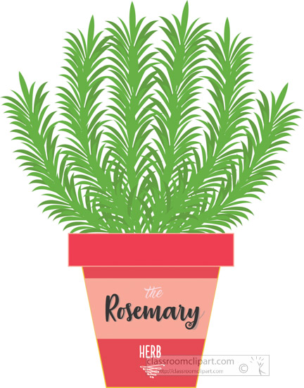 rosemary-growing-in-planter-herb-clipart-2318c.jpg