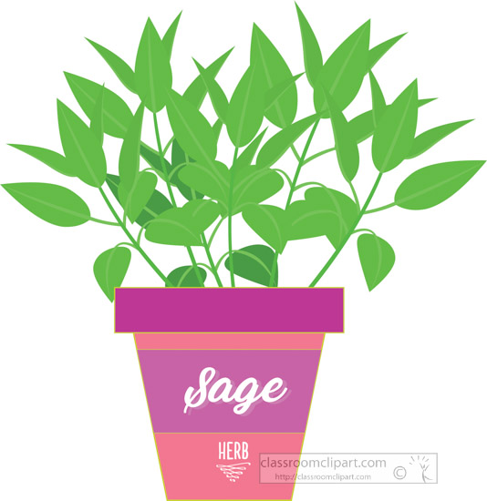 sage-growing-in-planter-herb-clipart-2318.jpg