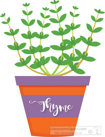 thyme-growing-in-planter-herb-clipart-2-318.jpg