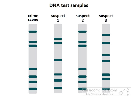 DNA-fingerprinting-clipart.jpg