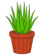 Clip Art Plants Clip Art free plants clipart clip art pictures graphics illustrations mother in laws tongue or snake plant planter size 84 kb