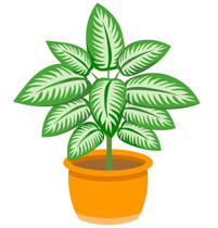 Image result for plants clipart
