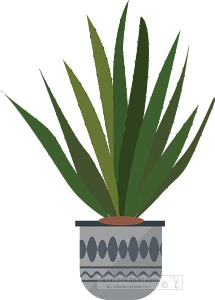 aloe-vera-plant-growing-in-decorative-pot.jpg
