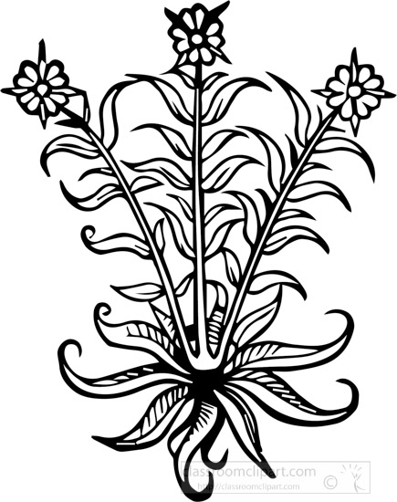black-white-outline-plant-with-small-flower-clipart.jpg