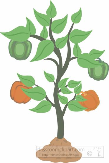 capsicum-bell-pepper-plant-clipart.jpg