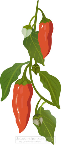 capsicum-red-pepper-plant-clipart.jpg