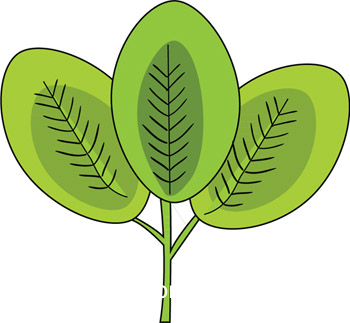 compound-palmate-lamina-leaf-clover.jpg