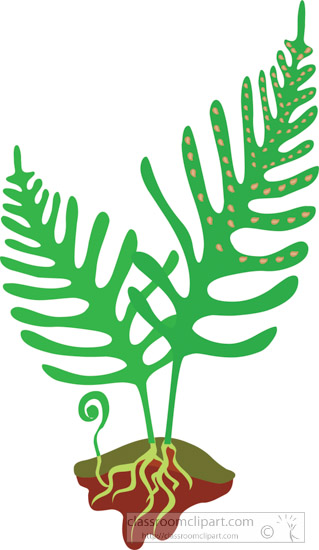fern-frond-with-spores-clipart.jpg